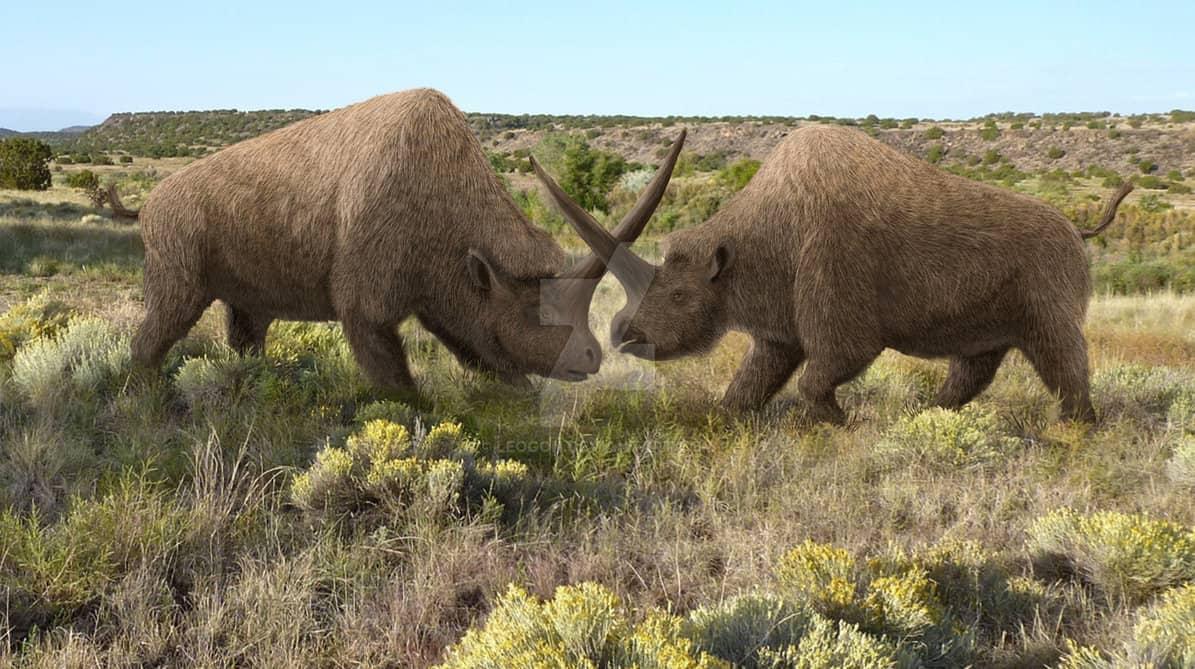Elasmotherium  Simple English Wikipedia the free