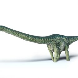 Apatosaurus by Peter Minister