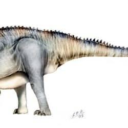 Apatosaurus by Sergio Perez