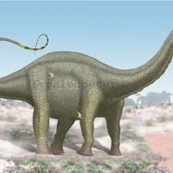 Apatosaurus by Peter Montgomery