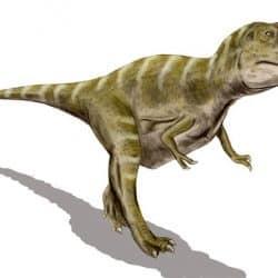 Gorgosaurus by Nobu Tamura