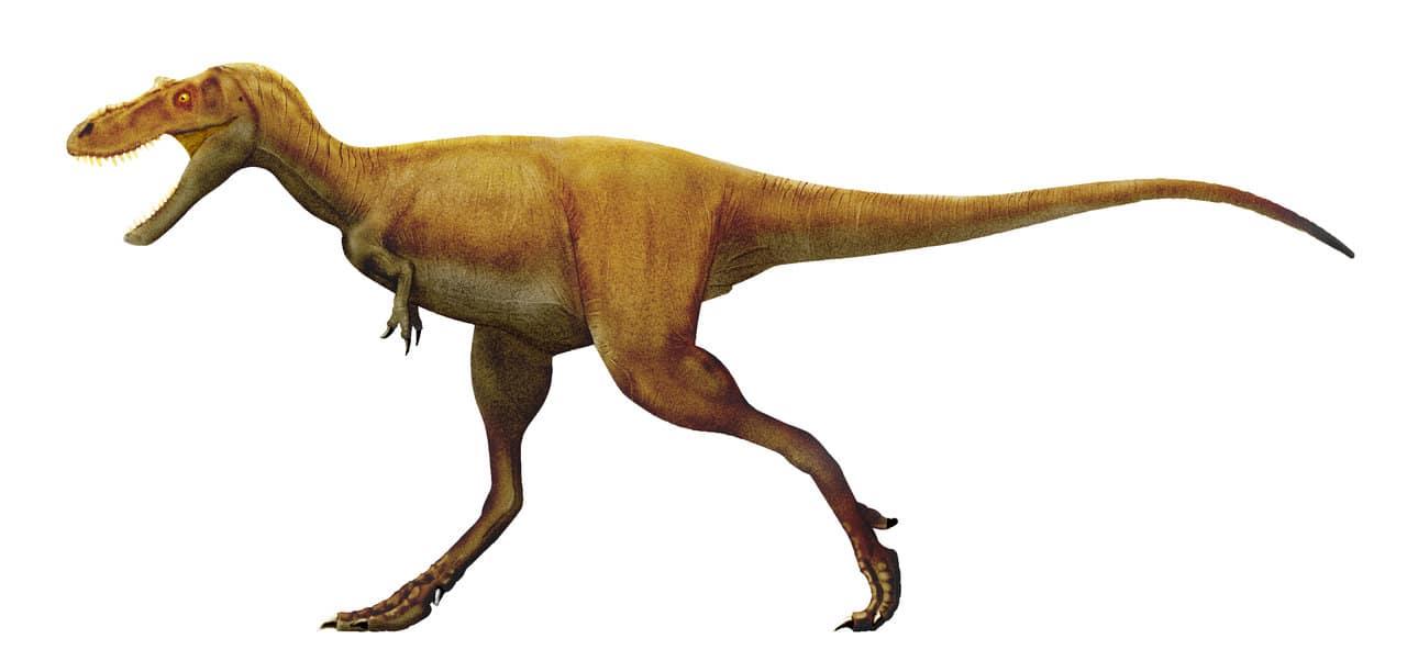 Gorgosaurus by Paulo Leite