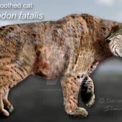 Smilodon by Daniel Reed