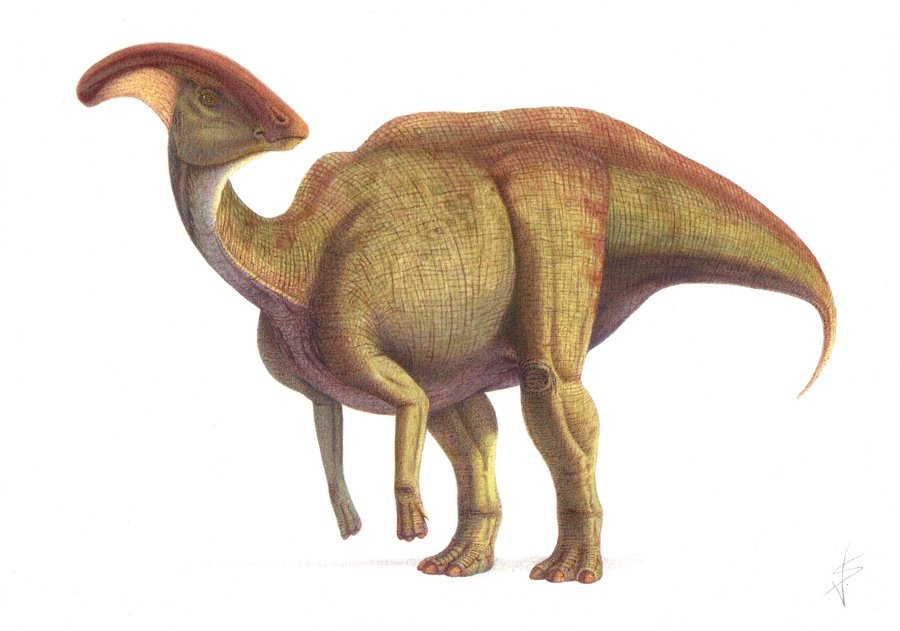 Image result for Parasaurolophus