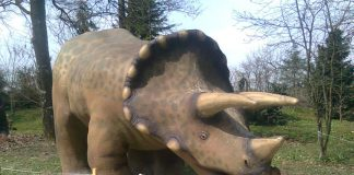 Triceratops by Charlie