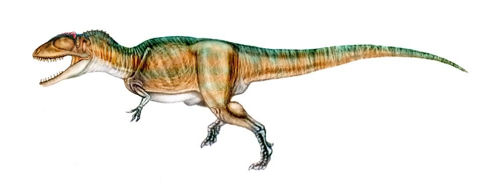 Carcharodontosaurus by Sergio Perez