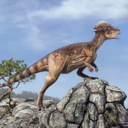 Pachycephalosaurus by Vlad Konstantinov