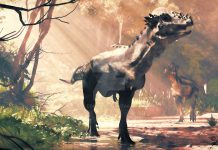 Pachycephalosaurus by Jk