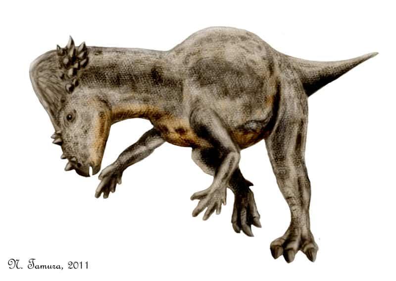 Pachycephalosaurus by Nobu Tamura