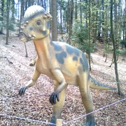 Pachycephalosaurus by Charlie