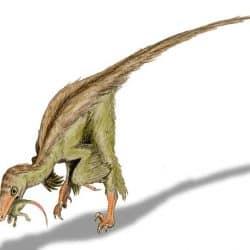 Troodon by Nobu Tamura