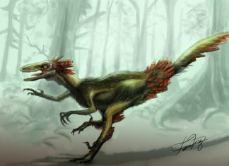Troodon by Tan