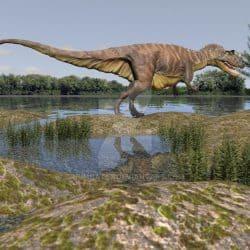 Ceratosaurus by Anthony