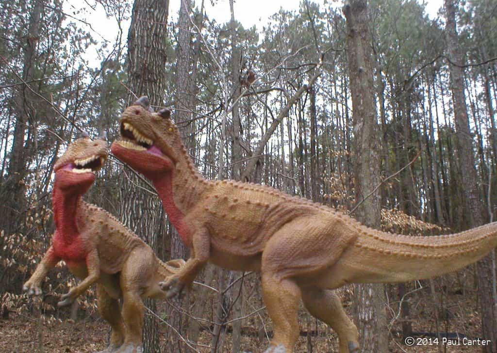 Ceratosaurus by Paul Carter
