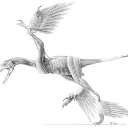 Microraptor by Jaime A. Headden