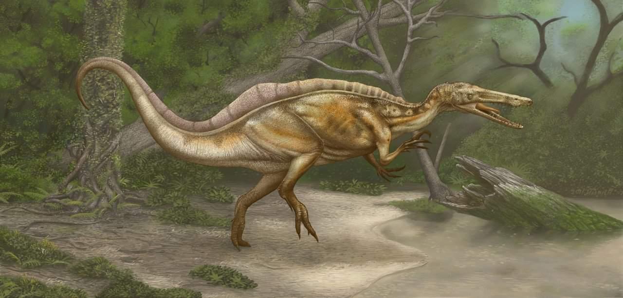 Suchomimus by Roman Ilyin