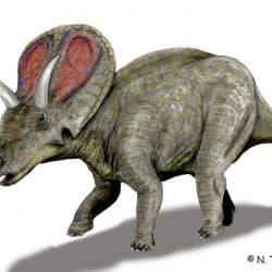 Torosaurus by Nobu Tamura