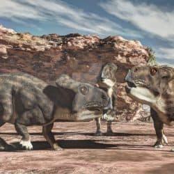 Protoceratops by Jk