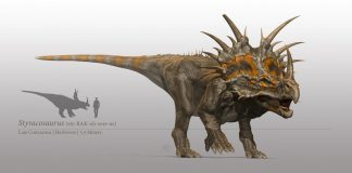 Styracosaurus by Steven Davis
