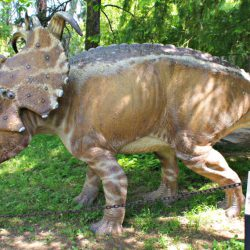 Pachyrhinosaurus by Lynus