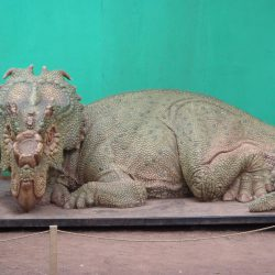 Pachyrhinosaurus by Cluny Tigerclaw McAlister