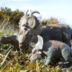 Pachyrhinosaurus by Jen