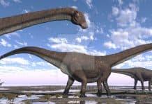 Seismosaurus by Jk