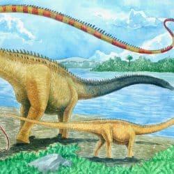 Seismosaurus by Vladimir Nikolov