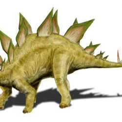 Stegosaurus by Nobu Tamura