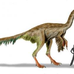 Gigantoraptor by Nobu Tamura
