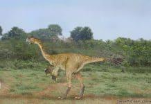 Gigantoraptor by SameerPrehistorica