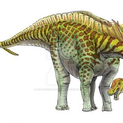 Amargasaurus by Andrew Minniear