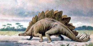 Stegosaurus by Heinrich Harder