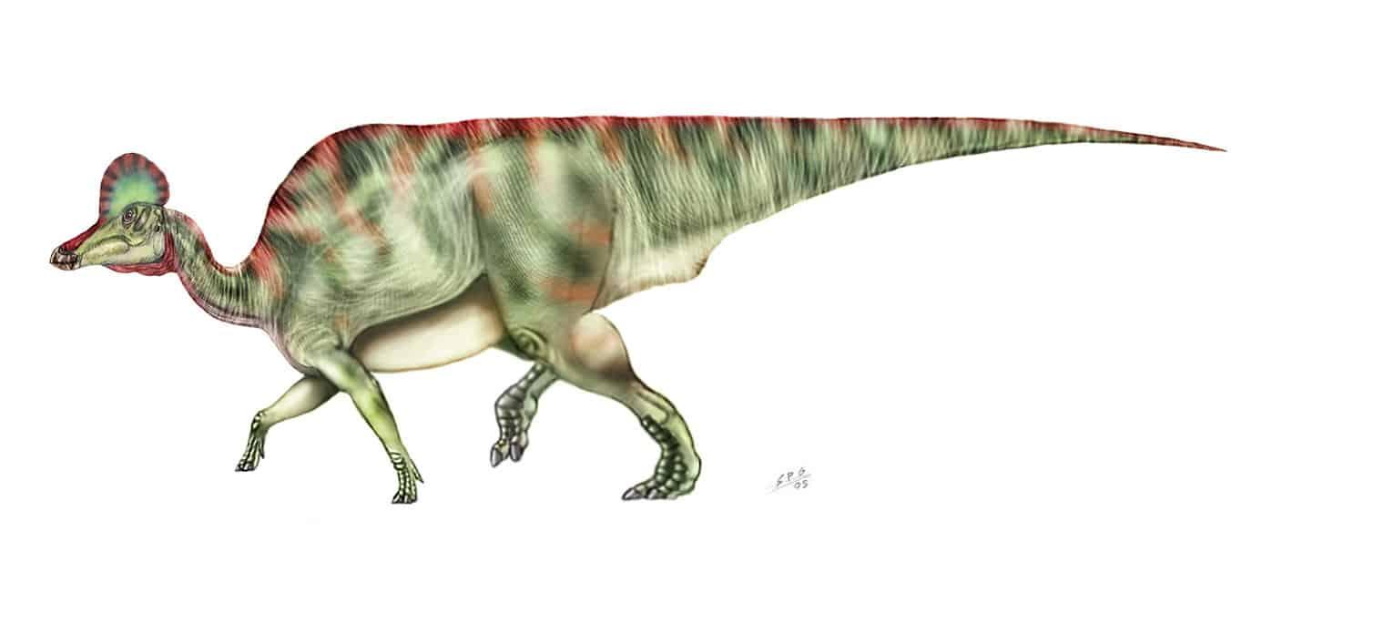 Corythosaurus by Sergio Perez