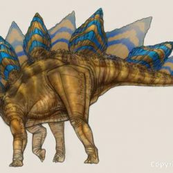 Stegosaurus by Tom Miller
