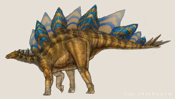 stegosaurus facts and pictures
