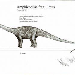 Amphicoelias by Robinson Kunz