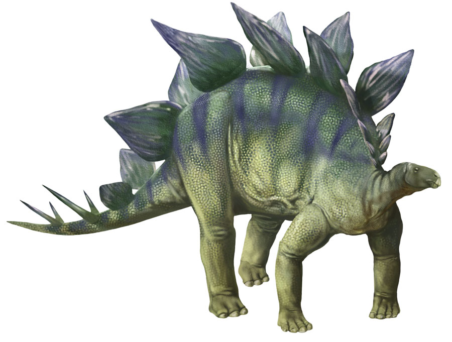 Image result for images of stegosaurus