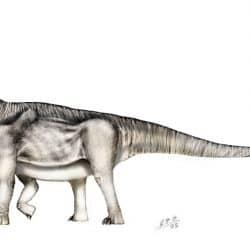 Camarasaurus by Sergio Perez