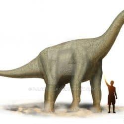 Camarasaurus by Peter Montgomery