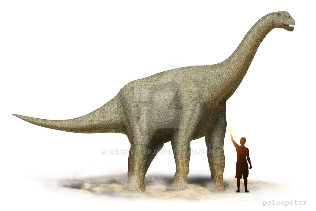 Camarasaurus - Facts and Pictures 46c835d21584