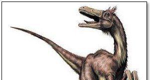 Velociraptor by Christopher Srnka