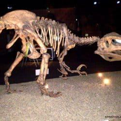 Megaraptor by Moonscream