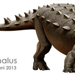 Euoplocephalus by Mohamad Haghani