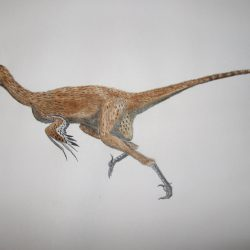 Dromaeosaurus by Oddity