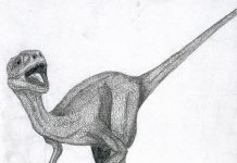 Dromaeosaurus by Julien