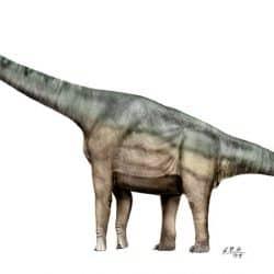 36_brachiosaurus_sergio_perez