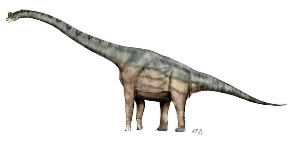 Brachiosaurus by Sergio Perez