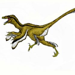Dromaeosaurus by Durbed
