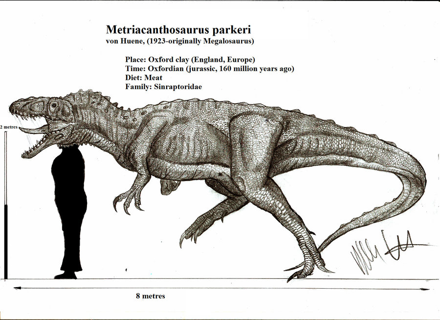 Metriacanthosaurus by Robinson Kunz